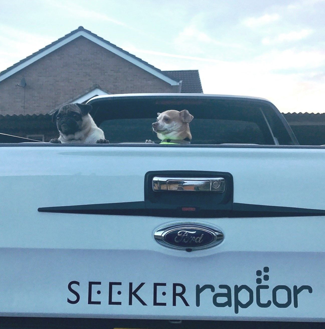 Toby the pug and Perry the chihuahua enjoy the Ford Ranger SEEKER Raptor too!